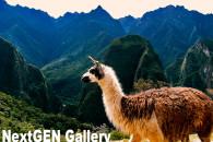 スライドショーも!人気NO1ギャラリー/WPプラグイン「NextGEN Gallery」
